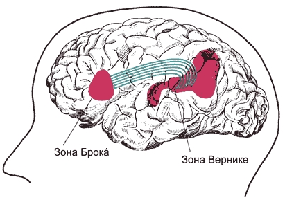 Мозговые центры речи